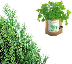 dill-and-parsley